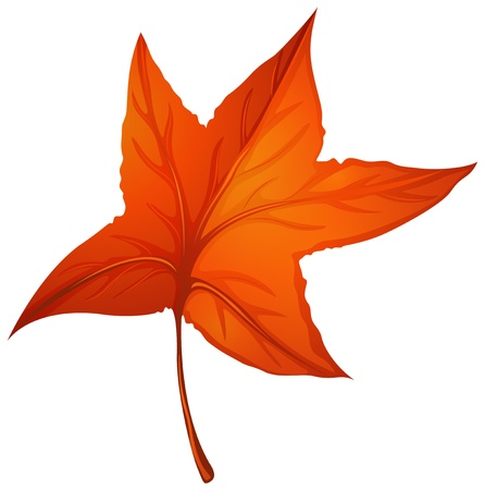 leaf line: Illustration of a star-shaped autumn leaf on a white background