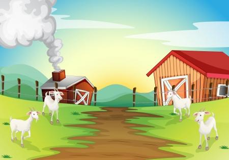 cultivating: Ilustraci�n de las cuatro cabras en la granja Vectores