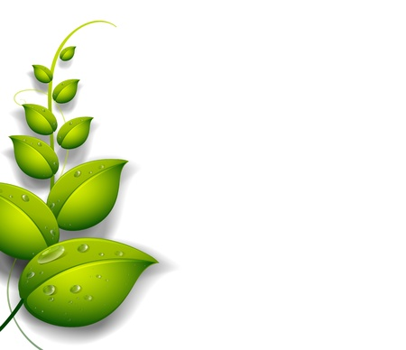 Illustration of a green plant with water drops on a white background Vector