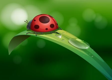 leaf water drop: Illustration of a bug above a long leaf with dews