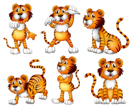 moody: Illustration of the six positions of a tiger on a white background Illustration