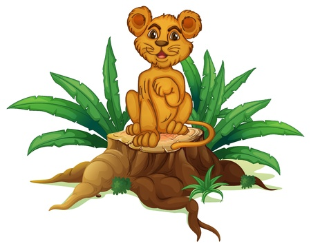 Illustration of a trunk with a young lion on a white background Stock Vector - 19301826