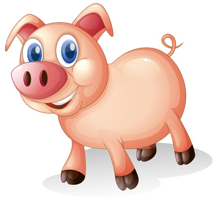 Illustration of a fat and smiling pig on a white background Vector