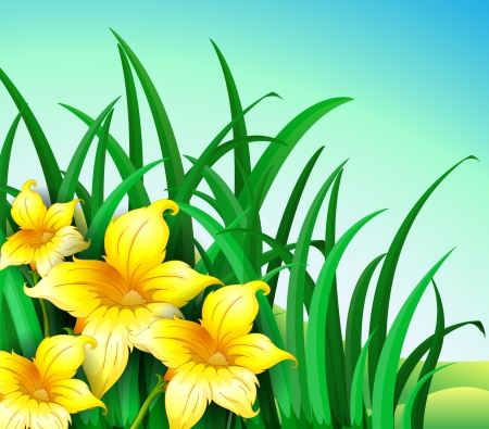 Illustration of a garden at the hill with yellow flowers Vector