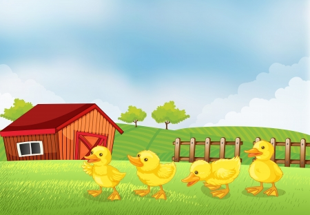 multiple image: llustration of the four chicks in the farm with a barn and a wooden fence
