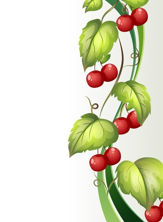 vine border: Illustration of a vine plant with fruits on a white background