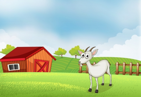 cultivated land: Illustration of a white goat at the farm Illustration