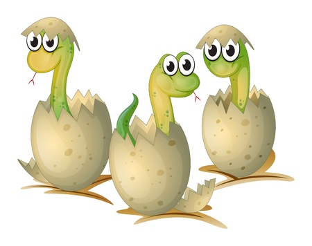 oblong: Illustration of the three newly cracked eggs of a snake on a white background Illustration