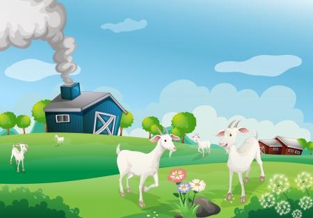 cabra: Ilustración de una granja con muchas cabras