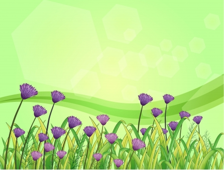 Illustration of the violet flowers in the garden  Vector