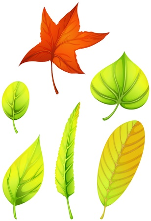 elliptic: Illustration of the six different leaves on a white background Illustration