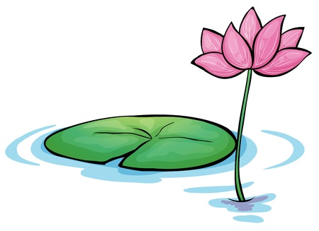 lilypad: Illustration of a waterlily flower on a white background Illustration