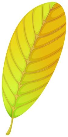 elliptic: Illustration of an elliptic leaf on a white background  Illustration