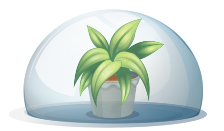 Illustration of a plant in a pot inside a transparent arc on a white background