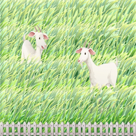 Illustration of the two goats in the farm  Vector