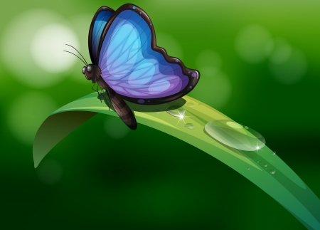 morning sunrise: Illustration of a blue butterfly above a leaf