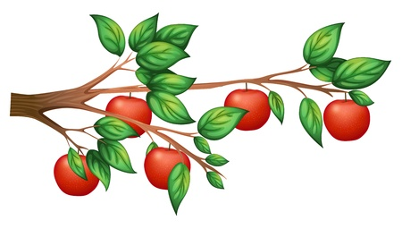 고립 된: 흰색 배경에 사과 나무의 그림
