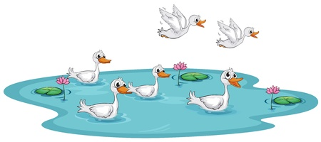 Illustration of a group of ducks at the pond on a white background Vector