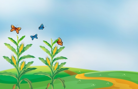 Illustration of a corn field at the hill with butterflies Stock Vector - 19718680