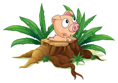 illegal logging: Illustration of a stump with a fat pig on a white background
