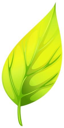 eliptica: Ilustración de una hoja en punta sobre un fondo blanco