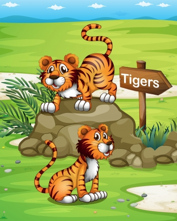 jungle plants: llustration of the two tigers near the wooden arrowboard Illustration
