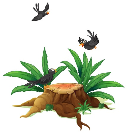 timber cutting: Illustration of a stump with three black birds  on a white background  Illustration