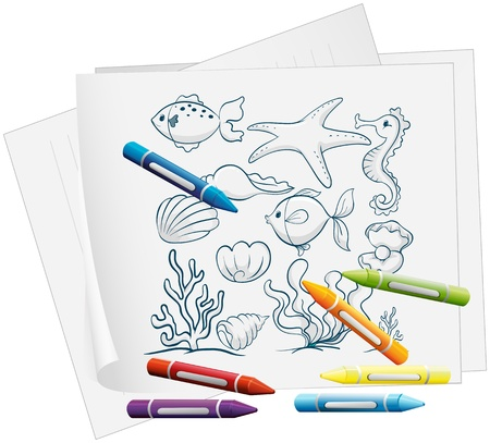 sea creatures: Illustration of a paper with a drawing of the different sea creatures on a white background