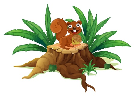 timber cutting: Illustration of a squirrel on a stump holding a nut on a white background  Illustration