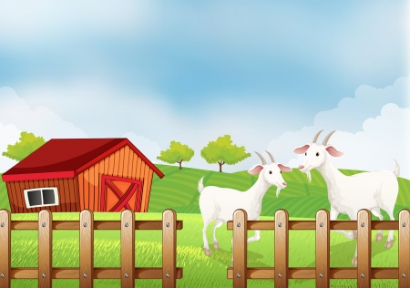 Illustration of the two white goats at the farm Vector