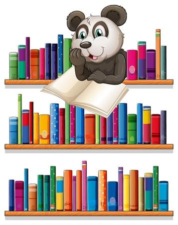 �tag�re bois: Illustration d'une lecture de panda dessus de l'�tag�re en bois avec des livres sur un fond blanc