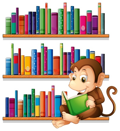 Illustration of a monkey reading in front of the bookshelves on a white background  Stock Vector - 20518190