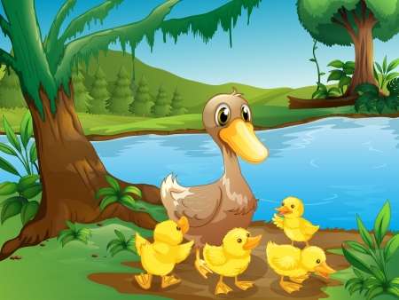 pond water: Illustration of a mother duck with her ducklings  Illustration