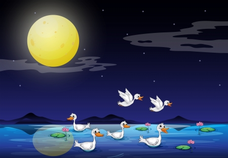 lilypad: Illustration of the ducks at the pond in a moonlight scenery