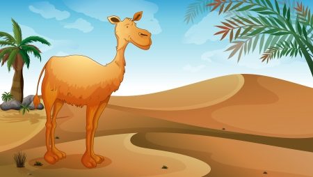 humps: Illustration of a desert with a lonely camel