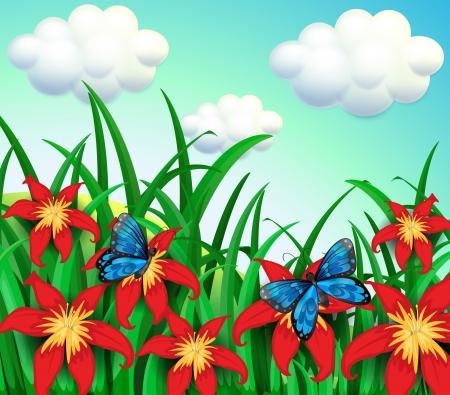 mariposas amarillas: Ilustración de las dos mariposas en el jardín con flores rojas Vectores