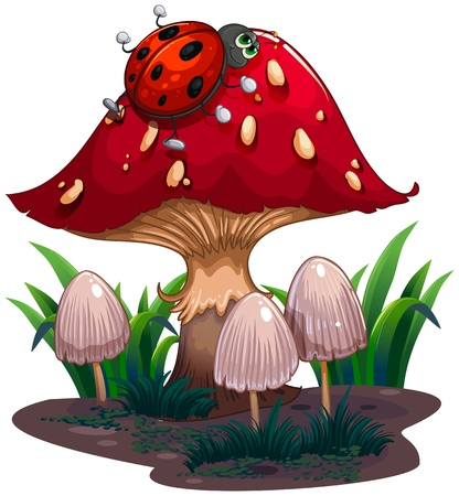 giant mushroom: Illustration of a bug crawling at the red giant mushroom on a white background