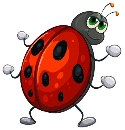 ladybug cartoon: Illustration of a red bug on a white background