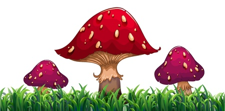 elongated: Illustration of the three mushrooms on a white background