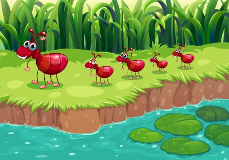 lilypad: Illustration of a colony of red ants at the riverbank