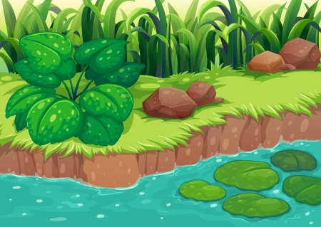 lilypad: Illustration of the green plants along the river