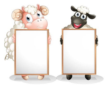 sheeps: Illustration of the two sheeps with empty boards on a white background