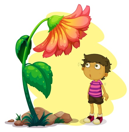flower blooming: Illustration of a little boy looking at the giant flower on a white background  Illustration