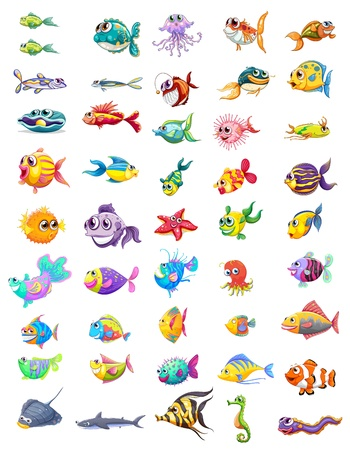 seafoods: Illustration of a group of different fishes on a white background