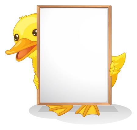 whiteboard: Illustratie van een eend schuilplaats aan de achterkant van een lege whiteboard op een witte achtergrond Stock Illustratie