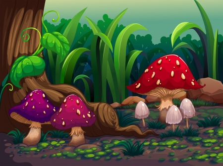 Illustration of the giant mushrooms in the forest Vector