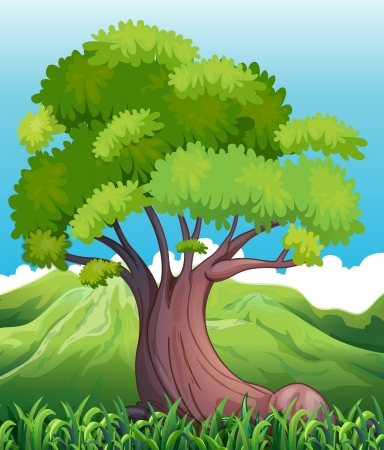 Illustration of a big old tree Vector
