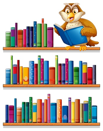 library book: Illustration of an owl above the wooden bookshelves with books on a white background