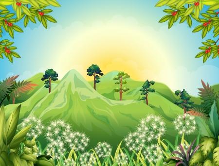 arboles frondosos: Ilustración de la alta montaña en el bosque Vectores
