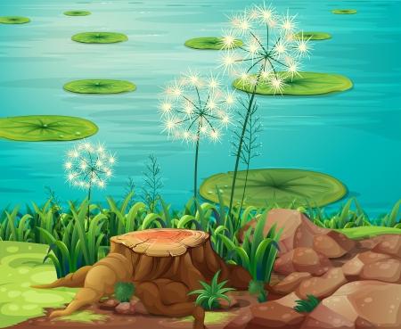 강둑: 강둑에서 나무의 그루터기의 그림
